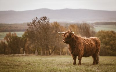 Like a bull at a gate: how do we ease problems in Education?