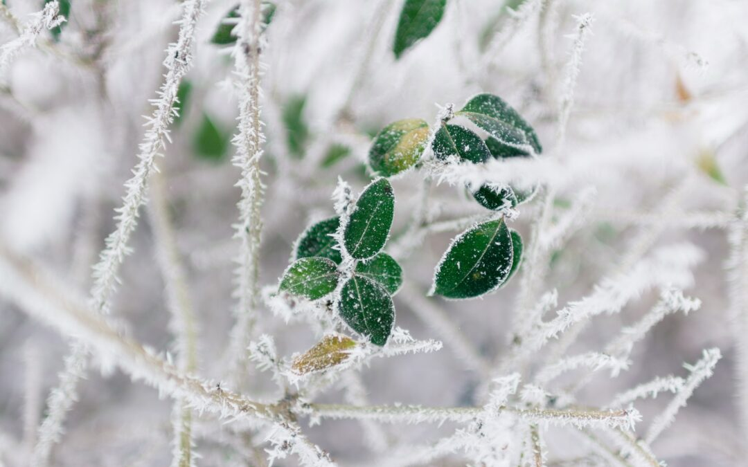 Frozen leaves on ice covered branches